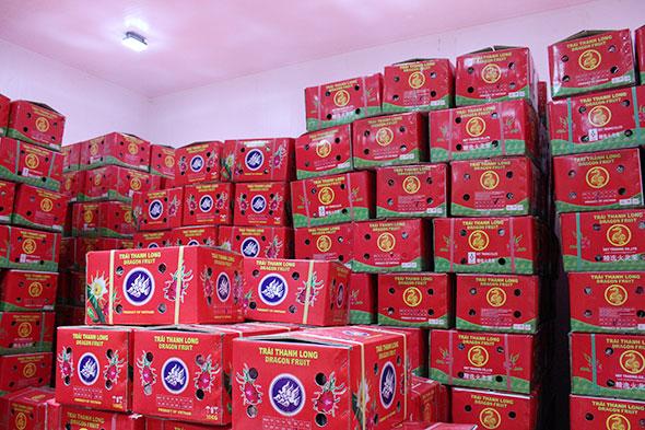 Cách đóng gói thùng carton bảo quản trái cây thanh long xuất khẩu