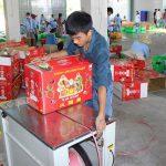 Cách đóng gói thùng carton bảo quản trái cây thanh long xuất khẩu đúng cách