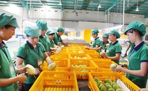 Xuất khẩu trái cây lần đầu vượt mặt xuất khẩu gạo
